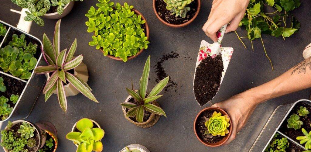 Експертите споделят: Градинарството освежава духа, колкото разходка в природата